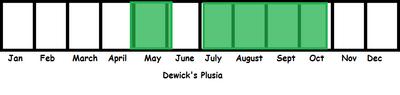 Dewick's PLusia TL