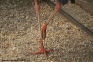 Stork Legs
