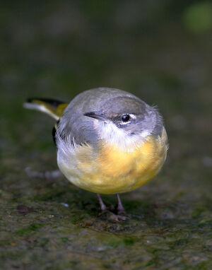 Birds.2009 033
