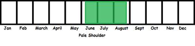 Pale Shoulder TL