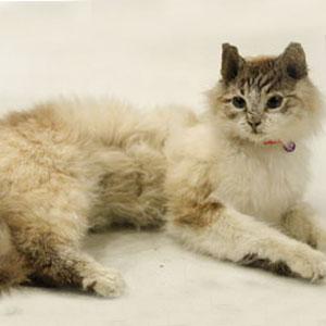 File:Mr-kitty-02.jpg