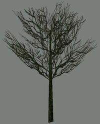DromEd Object Model treewin3