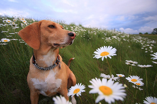File:Smell the flowers.jpg