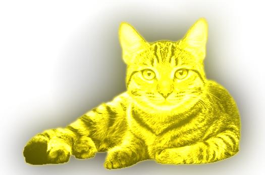File:Our-cat-shop-image 00000.jpg