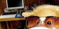 Horse's Horrid Hairdo