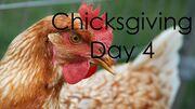 ChicksgivingDay4