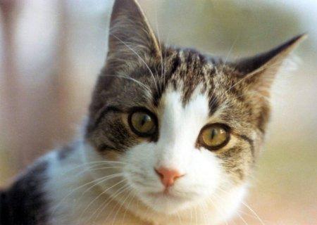 File:Cat photo picture.jpg
