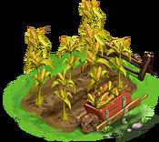 Decoration 3x3 corn garden tn@2x