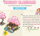 Cherry Blossoms Challenge