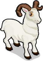 Dall sheep single