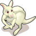 Albino Kangaroo single