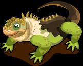 Galapagos Land Iguana single