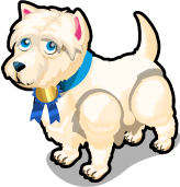 West Highland White Terrier single