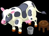 Dairy Cow single