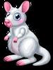 Albino wallaby single