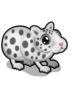 Spotted Hamster