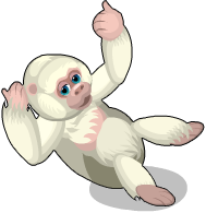 Albino gorilla an