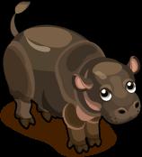 Pigmy Hippo single