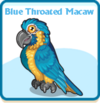 Blue throated macaw card