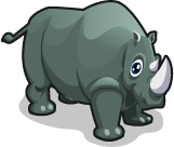 Indian Rhino single