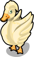 White Crested Duck single