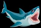 Great White Shark single