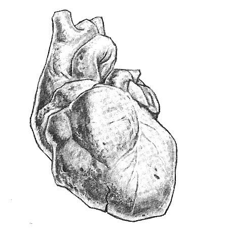 File:Heartofstone.jpg