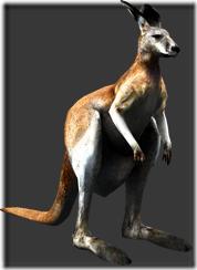 File:Kangaroo thumb.png
