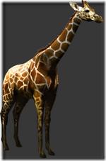 Giraffe thumb