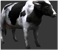 Holstein thumb
