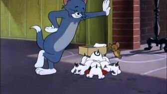 Tom & Jerry Taking Care Of Tom Cartoon World