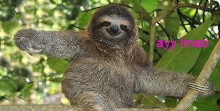 File:Sloth2.jpg