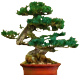 File:Bonsai tree.png