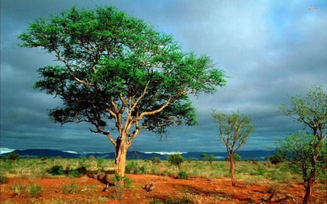 File:Nature Park 001.jpg