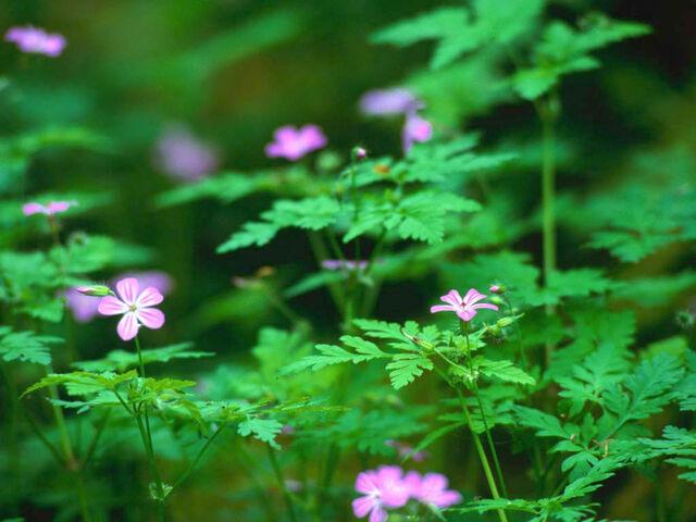 File:Forest Flowers.jpg