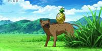 Hyenapple