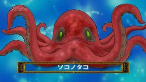 Bottom Octopus