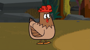 Clucky is here