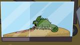 ChameleonTopDog