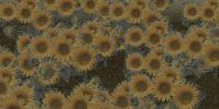 Jardín de girasoles