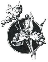GoMSigil-Rumia