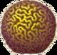 Brain Coral Icon