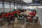 Tractor World Ireland - indoor display - 2013 - IMG 0549
