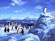 Soldier penguins