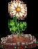 Daisy (fully grown) - Farming 2016