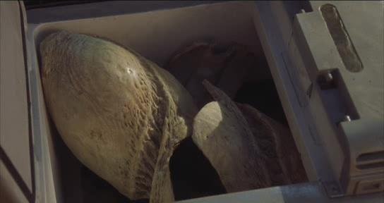 File:Graboid Egg (8).jpg