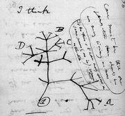 Darwin tree lg