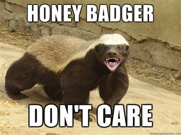 File:Honey-Badger-Dont-Care.jpg