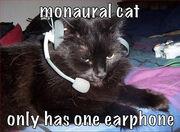 Monaural cat