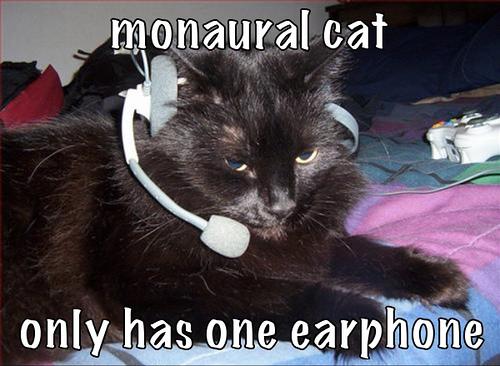 File:Monaural cat.jpg